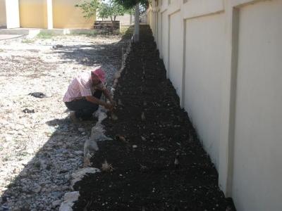 Zona franca realiza jordana de reforestación en escuela en Barahona: