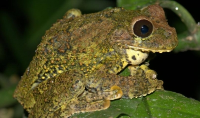 Afirman 46 especies endémicas amenazadas con desaparecer RD: