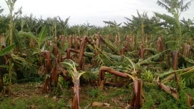 Tormenta deja pérdidas RD$50 millones en La Cruz de Manzanillo: