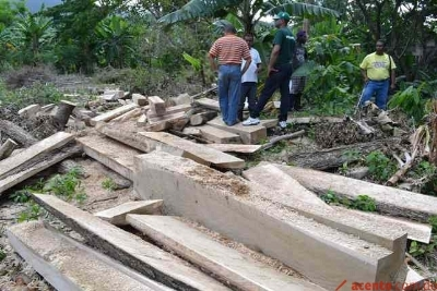 En Puerto Plata cortan decenas de árboles con apoyo del Gobierno