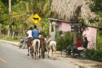 Camino a Samaná se pueden apreciar los jóvenes que montan caballo para realizar sus actividades cotidianas.