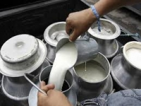 Productores de leche al borde quiebra por sequía: