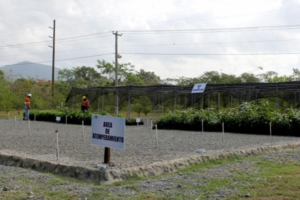 inauguran vivero forestal con plantas nativas de bonao